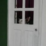 lonesome-dog-olinda-recife-musique21-huillet
