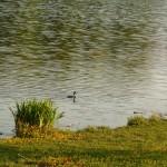 bird-lake-musique21-huillet