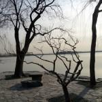 trees-beijing-musique21-huillet