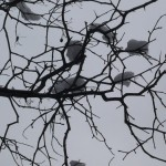 branches-snow-new-york-musique21-huillet