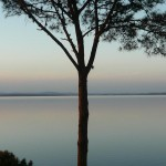 tree-punta-del-este-uruguay-musique21-huillet