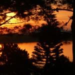 trees-dawn-punta-del-este-uruguay-musique21-huillet